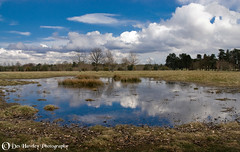 CHESHIRE LANDSCAPE. (Des Hawley. Over 1.7 million views !!) Tags: england lake nature water pool beautiful clouds reflections reeds landscape landscapes cool pond nikon cheshire outdoor gorgeous awesome stunning daytime grasses breathtaking peacefulness tatton tattonpark supershot goldstaraward absolutelystunningscapes platinumpeaceaward deshawley thegalaxyhalloffame postie22 thegalaxystars