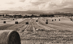 bales of hay (Marisa (sleepflower18)) Tags: autumn field sepia landscape scotland countryside scenery harvest hay balesofhay rotoballe roundbale 3waychallenge