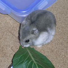 小松菜を食べるコーキ