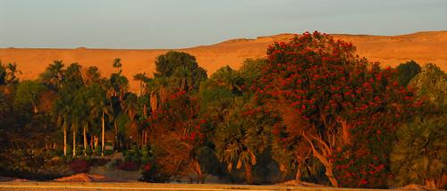 LND_2955 Aswan