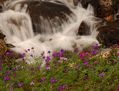 ~ Flowers At The Waterfall ~ (Peem (pattpoom)) Tags: flowers flores fleurs waterfall blumen explore bunga fiori  blommor bloemen blomster bulaklak kwiaty hoa   blm iekler     kvtiny  blueribbonwinner   abigfave blthanna  theperfectphotographer  vosplusbellesphotos nikkorafs2470mmf28ged  kukkien virgokat