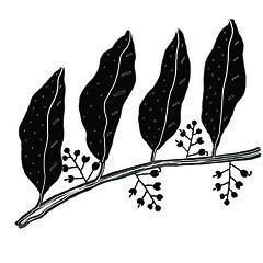 shasha-floral pattern (Shasha ma) Tags: original illustration design blackwhite all right rights spiritual reserved shasha simplify patterndesign shashas