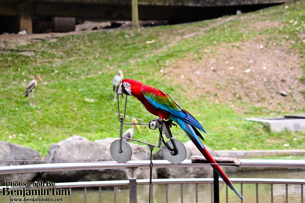 birdpark1_31