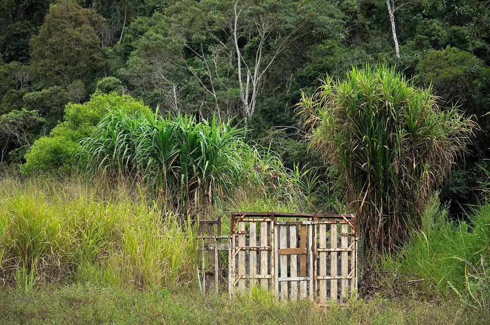 Trailer's Skeleton In Atlantic Forest