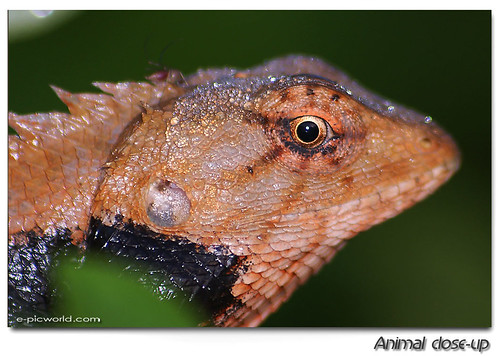 A lizard close up 3 picture