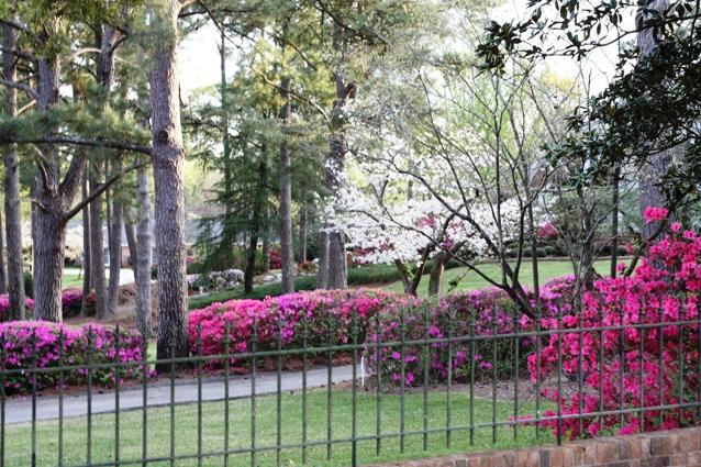 neighborsyard