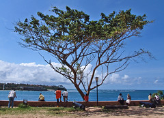 sunday (paololivorno) Tags: sea people black tree clouds port kenya weekend sunday mombasa goldengarden paololivornosfriends lamiciziafladifferenza
