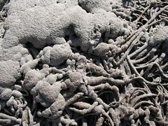 (HWSH) Tags: ireland abstract seaweed macro texture beach sand decay