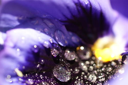 purpledrop7