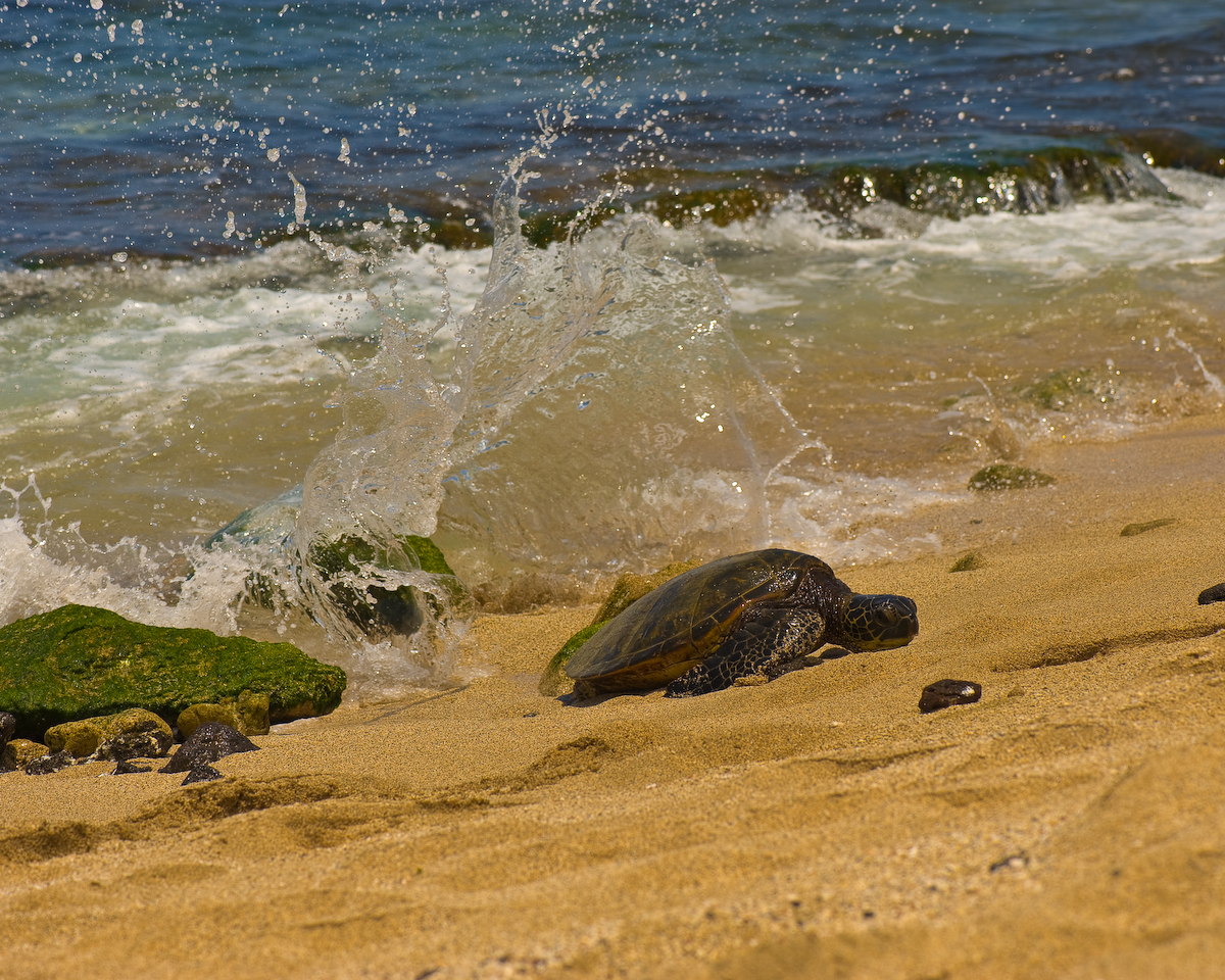 Turtles (2 of 3)