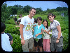 tea picking with kagan and the kids (GenevieveLB) Tags: friends japan kids japanese tea greentea tealeaves tealeaf konichiwa teapicking greenteafeilds