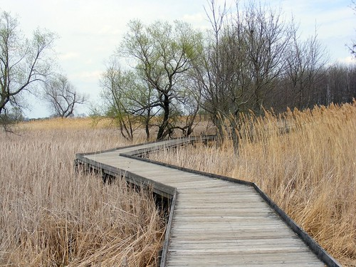 Maumee Bay Winding Boardwalk