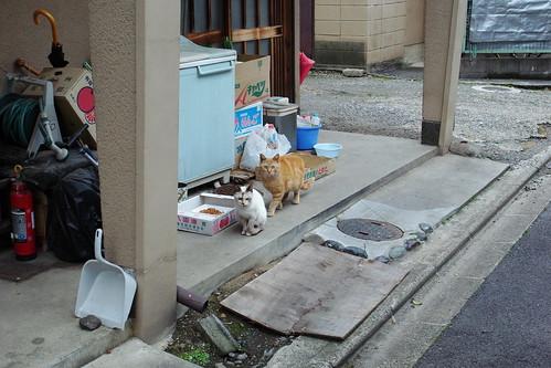 Today's Cat@20090428