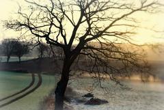 The other side! (Little Pebble For the animal rights!) Tags: morning mist tree sunrise skne spring nikon frost sweden south tracks lisa magical scania skane littlepebble d40x lickas forslov lickas2007