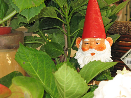 garden gnome, indoor plants