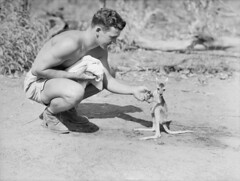 An American soldier with a joey, 1942 (Australian War Memorial collection) Tags: pet white man black animal soldier person thomas joey historic american kangaroo ww2 soldiers 1942 wtf marsupial hooper gi roo secondworldwar americansoldier australianwarmemorial petkangaroo commons:event=commonground2009