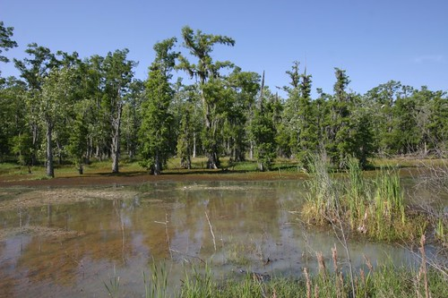 Louisiana wetlands b/t Morgan City and Houma...
