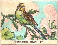 oiseaux mart 2