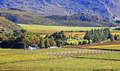 A change of seasons! (Jo-Ann Stokes) Tags: autumn trees mountains landscapes colours seasons may vineyards farms dedoorns mywinners platinumphoto anawesomeshot