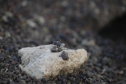 The ants of Balmorhea, Texas