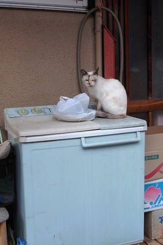 Today's Cat@20090528