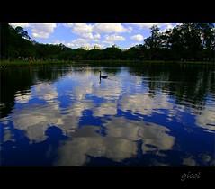 by myself to reflect... (gicol) Tags: park parque sky parco lake reflection nature water brasil clouds swan agua eau nuvole cielo reflejo ibirapuera acqua reflexo riflesso cigno sanpaulo jardinpaulista