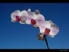 The Perfect Nature (tipiro) Tags: naturaleza orchid nature natureza best orquidea soe naturesfinest blueribbonwinner coth supershot bej golddragon mywinners abigfave platinumphoto ultimateshot isawyoufirst diamondclassphotographer flickrdiamond theunforgettablepictures newacademy overtheexcellence platinumheartaward theperfectphotographer goldstaraward natureselegantshots rubyphotographer flickrlovers 100commentgroup artofimages flickrclassique bestcapturesaoi