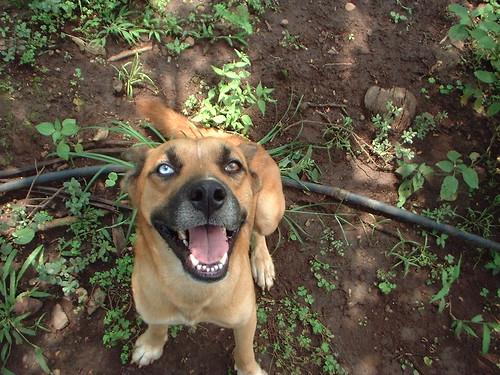 Los Amates El Salvador Ranger the dog