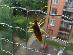 brrrrrr (Marinyu..) Tags: macro closeup nopostprocessing supershot insest poloska mybalkony aphonoidesangustissimus