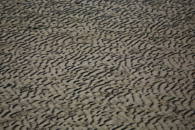 砂浜の文様