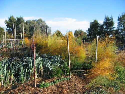 Asparagus in Autumn