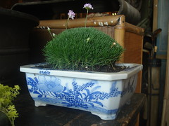 "Moss Mound in Asian Pot • <a style=""font-size:0.8em;"" href=""http://www.flickr.com/photos/51721355@N02/5763314296/"" target=""_blank"">View on Flickr</a>"