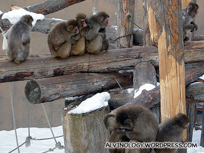Can tell the monkeys are very cold
