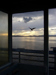 Windowzoo Pelican (liquidnight) Tags: seattle sunset sky streetart water birds silhouette clouds project pier twilight stickers pelican international pugetsound decal seabirds communityart ephemeralart windowzoo