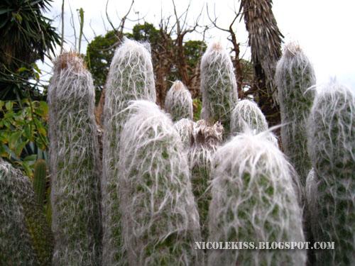 fury cactus