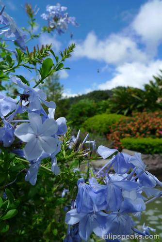 Nature @ Bukit Tinggi