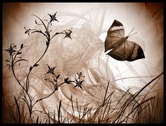 Vision (gabrielescotto) Tags: sky art texture apple photoshop butterfly dark design fly amazing mac vision brushes farfalla cs4 pennelli aplusphoto gabrielescotto