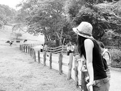 * (YENTHEN) Tags: bw cow lotus farm taiwan streetphotography miaoli yenthen