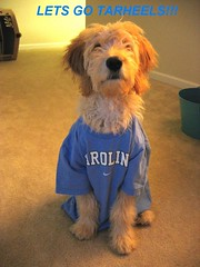 Cooper showing his Carolina pride