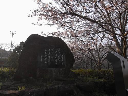 2009年-桜@当麻寺-07