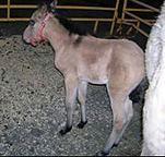 Kinship Circle - 2009-03-27 - Help Animals In North Dakota 02 by smiteme