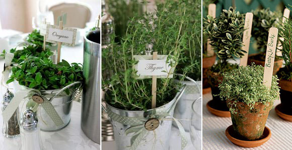 Eco-Friendly Wedding Favor - Potted Herbs
