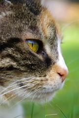 cat's eye (Stephi 2006) Tags: magicmoments nele sigma18200mmf3563dc bestofcats
