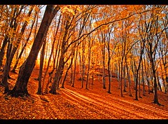 Aranyerd (Botond Horvth) Tags: world travel autumn light sun color tree nature forest canon season wonder landscape gold golden leaf nice europe hungary paisaje 2008 beuty espritu botond horvth szalajka vosplusbellesphotos