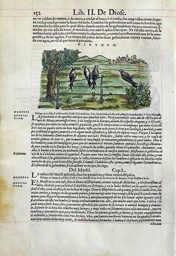 011-De las golondrinas- Pedacio Dioscorides Anazarbeo 1555