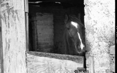 Flash (Anthony Cronin) Tags: ireland horses bw dublin film analog 35mm streetphotography ishootfilm innercity ac agfa rodinal apug 50mmf14 nikonf80 foma trotters trotting dubliners dublinstreet fomapan agfarodinal realireland dublinstreets allrightsreserved dublinlife streetsofdublin irishphotography lifeindublin fomafomapan irishstreetphotography fomafomapan100 dublinstreetphotography streetphotographydublin anthonycronin filmdev:recipe=5215 dublintrotting livingindublin insidedublin livinginireland streetphotographyireland photangoirl