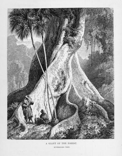 005-Los Ríos Amazonas y Madeira 1875- Un gigante de la selva