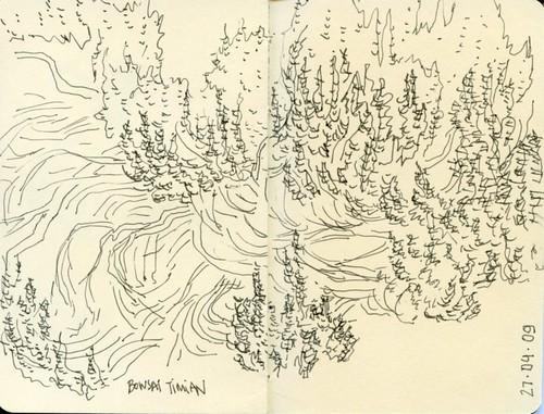 Bonsai Thyme