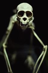 lanky midget zombie anorexic porn (mugley) Tags: blur face museum dead skeleton death skull prime monkey nikon dof bokeh iso400 teeth sydney australia exhibit creepy nsw bones newsouthwales collegest nikkor primate simian wideopen d300 longarms 50mmf14d australianmuseum eyesockets fiddymil austmus hopeitsamonkeyanyway brownjenkinonstilts gettyreject