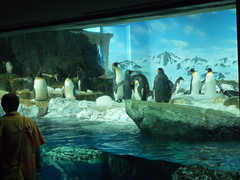 鴨川シーワールド 極地ペンギン舎